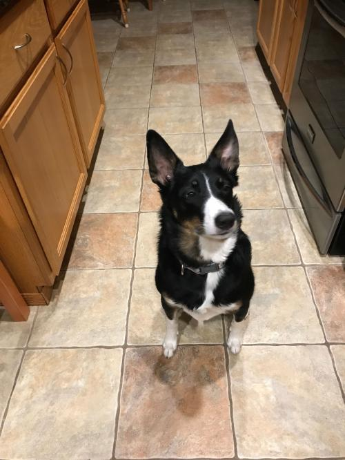 Remi (courtesy listing in Milwaukee, WI)