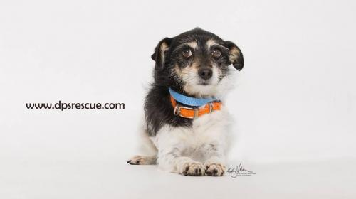 Adoptable Dogs In Your Local Shelter L Adopt A Pet L Aspca