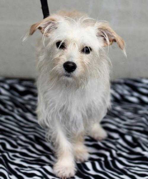 Image of: Cute Indy We Luv Puppies Luv Puppies Adoptable Dogs In Your Local Shelter Adopt Pet Aspca
