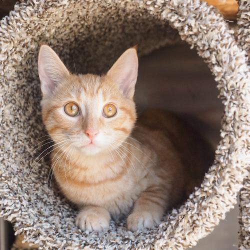 Adoptable Cats in Your Local Shelter l Adopt a Pet l ASPCA