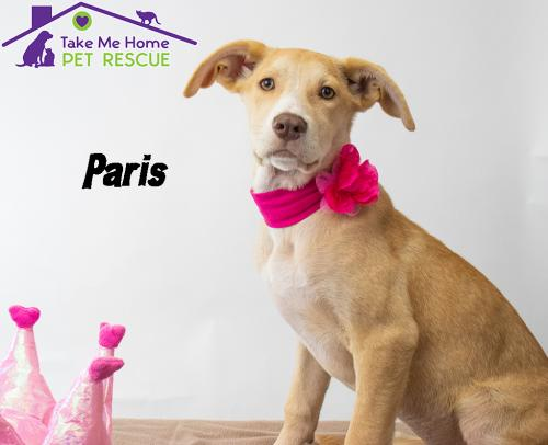 Available Dogs and Puppies   Take Me Home Pet Rescue
