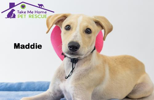 Available Dogs and Puppies | Take Me Home Pet Rescue