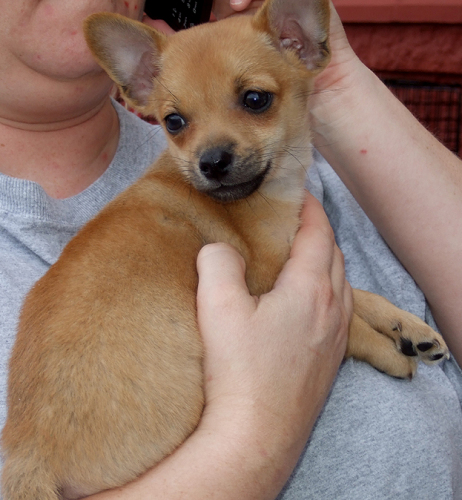 Small Dog Rescue Groups