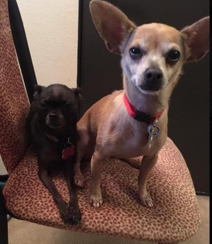 Dutch- Bonded with Jimmy