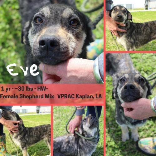 Eve - Foster or Adopter Needed!