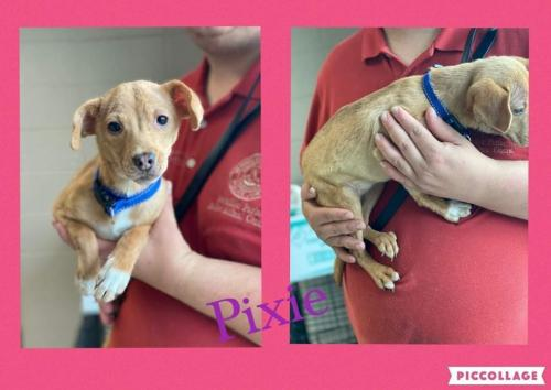 Pixie - Foster or Adopter Needed!