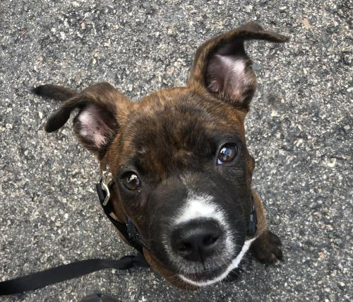 Copper - ADOPTED 08.22.20