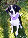 Tilly-ADOPTED 02.02.13