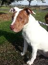 Daphne-ADOPTED 12.26.12