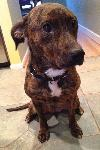 Starr-ADOPTED 01.12.13