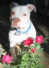 Tonka - ADOPTION PENDING