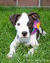 Hl Litter-Kristoff-PENDING ADOPTION