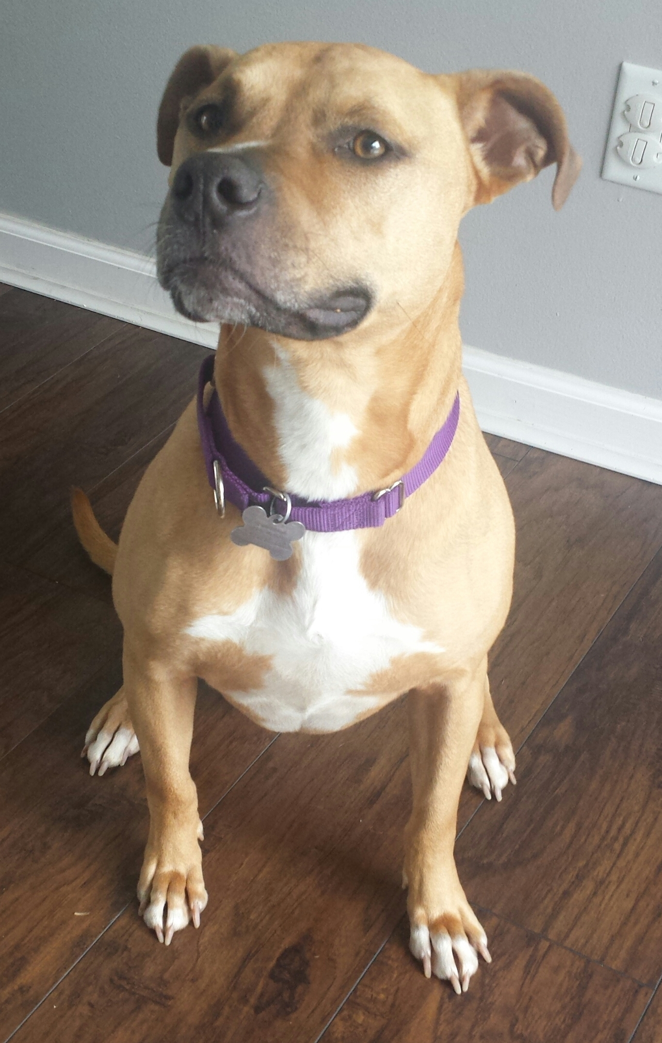 Praline - ADOPTED 08.23.15s Web Page