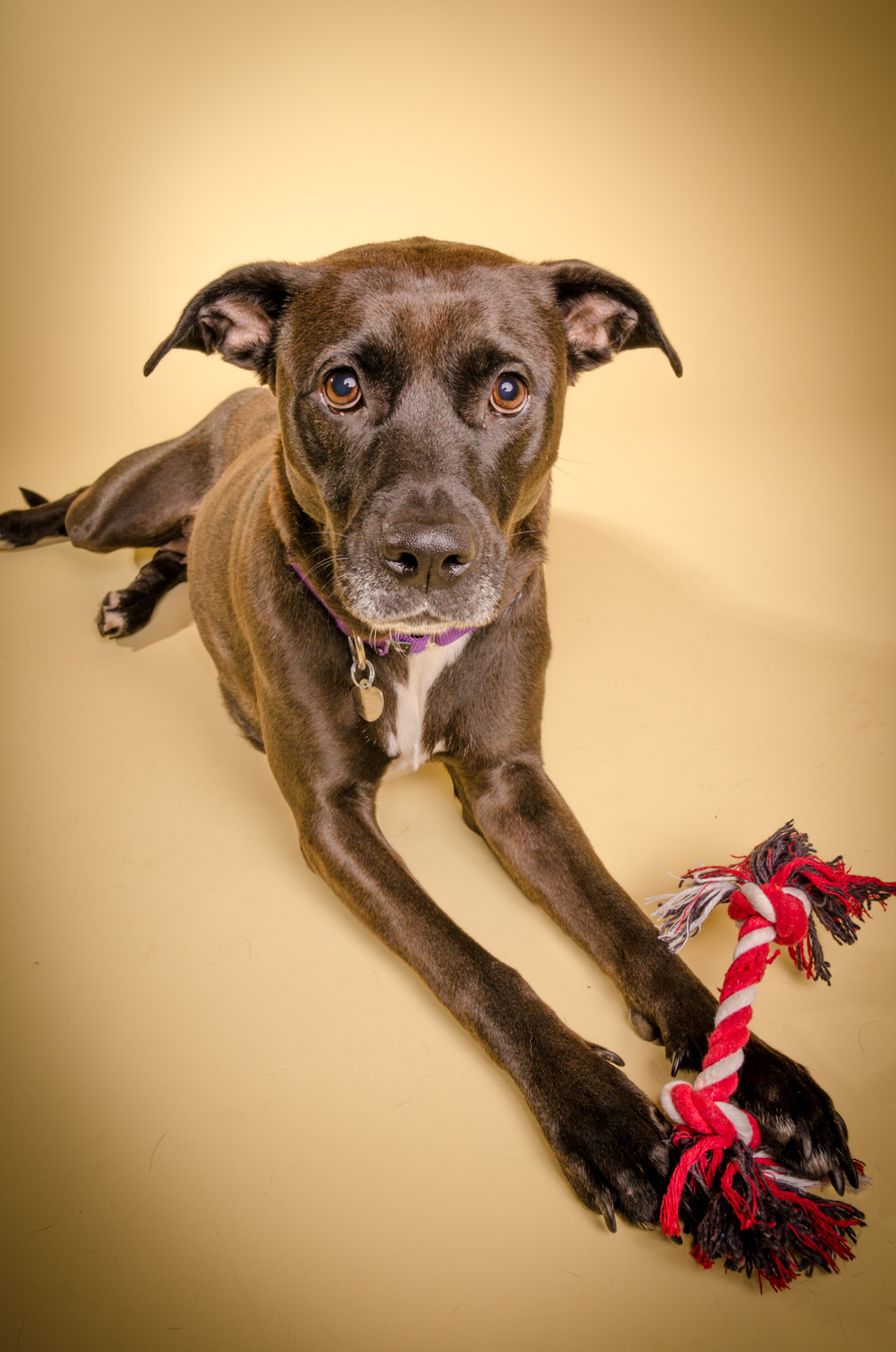 how to get a foster dog adopted
