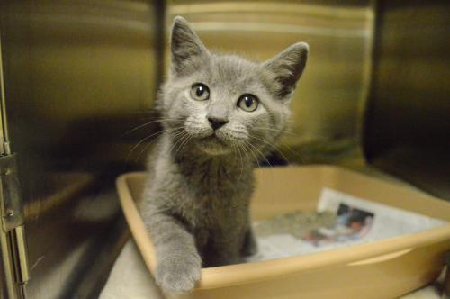 KITTENS - Assorted breed, color, size