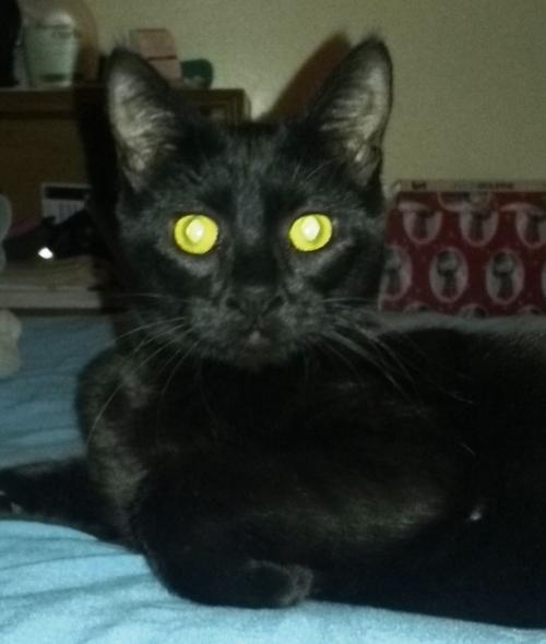 MYSTIC-Extremely playful!!