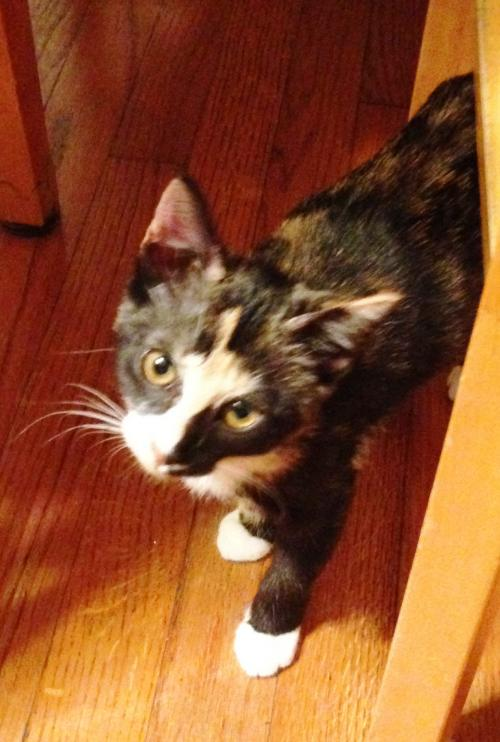 KITTEN-PATCHES TOO