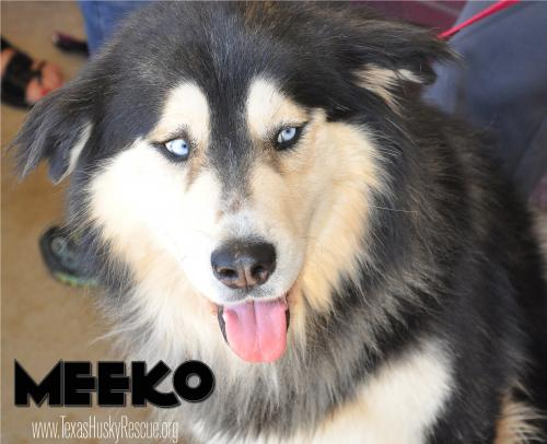 Meeko--Foster Needed