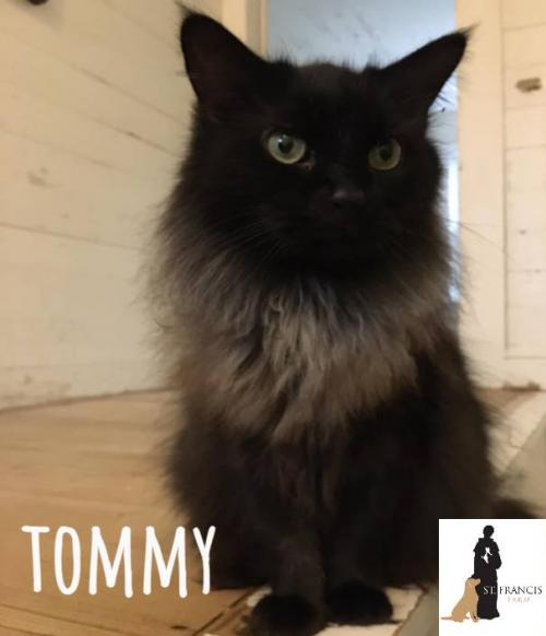TOMMY (cat)