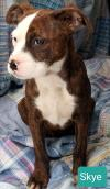 Skye *Available 2-2-2020*