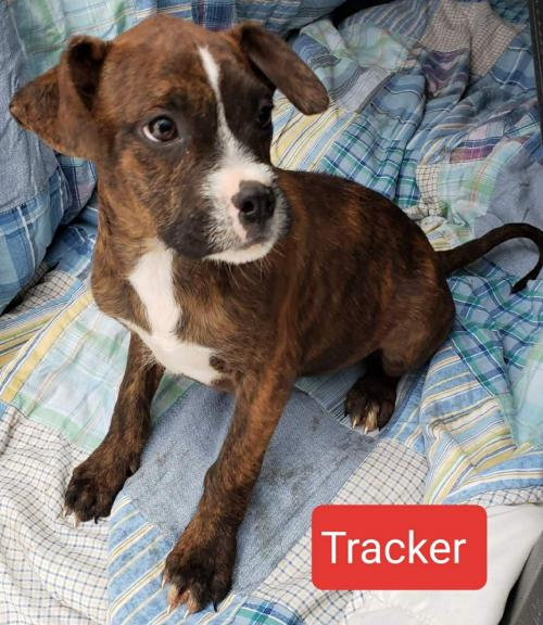 Tracker *Available 2-2-2020*