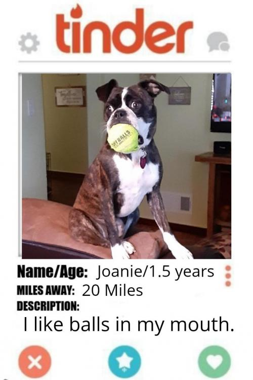 Joanie *Special home required*