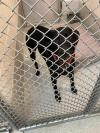 adoptable Dog in Statesville, NC named COLBY