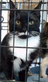adoptable Cat in Statesville, NC named LOLA