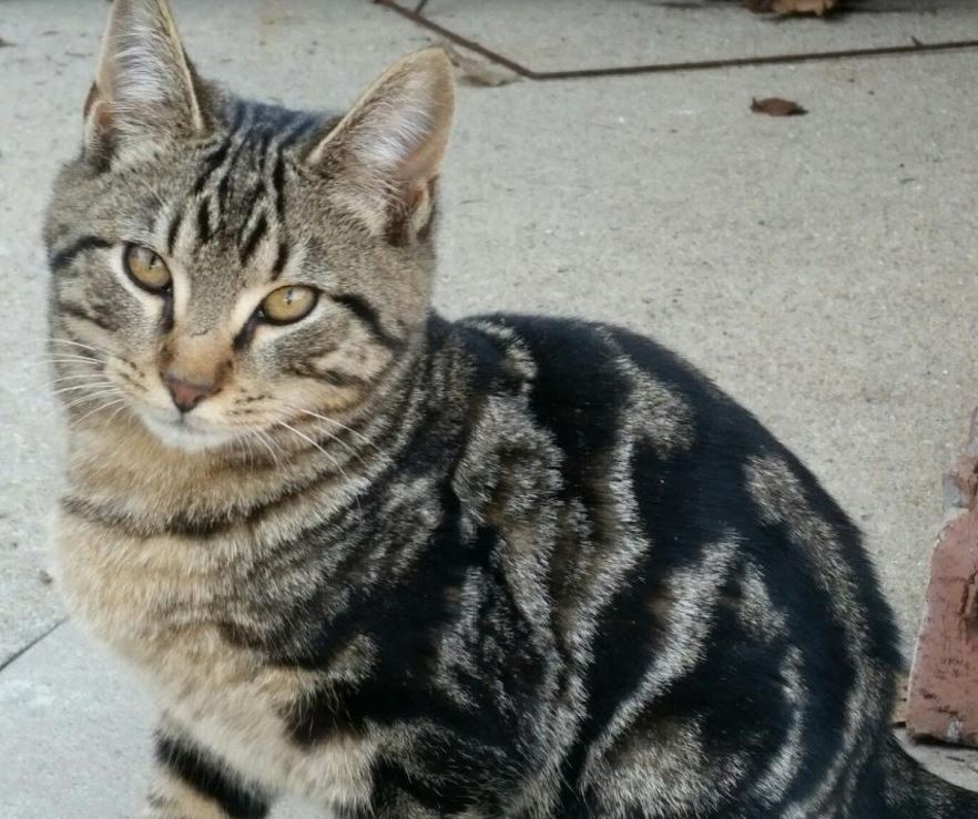 Declawed Cats For Adoption In Tucson