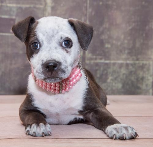 Give Rescue Pets A Second Chance By Donating To Colorado Puppy Rescue