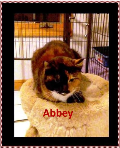 Abbey Senior in Need of a HOME