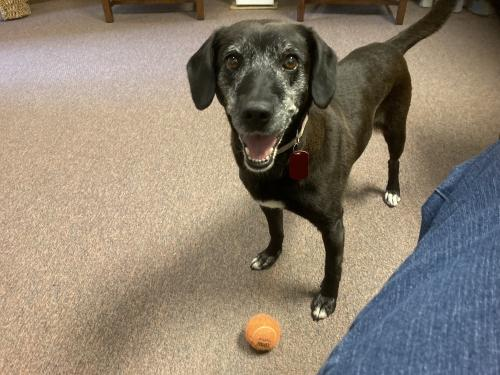 Shadow: URGENT!  Great girl, but as only child