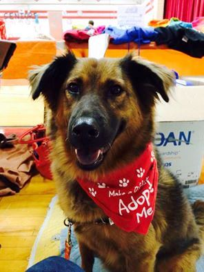 Lucy - Cell Dog Graduate