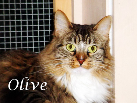 Olive the Cat