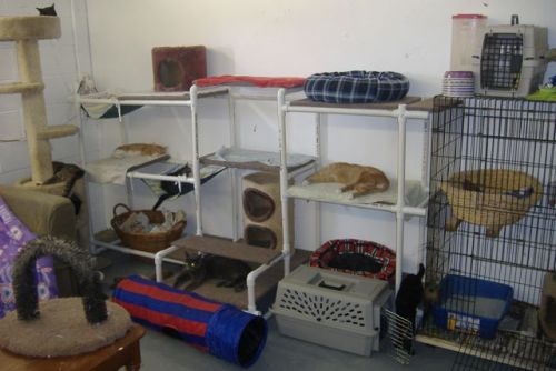 Visit Our Cat Room