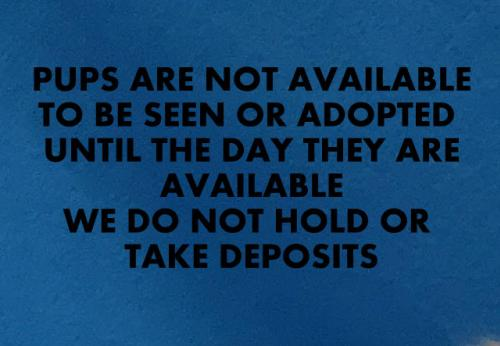 adopt A1DOGS ARE NOT AVAILABLE TO BE SEEN TILLDATEPOSTED