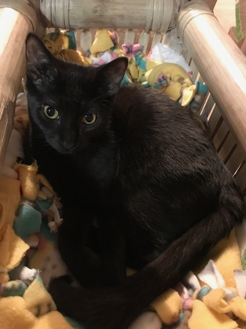adopt OMalley