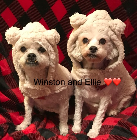 Ellie* Bonded with Winston*