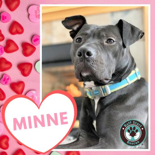 Minne *Foster or Adopter needed*