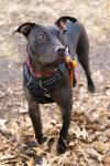 Glory *Foster or Adoper Needed*
