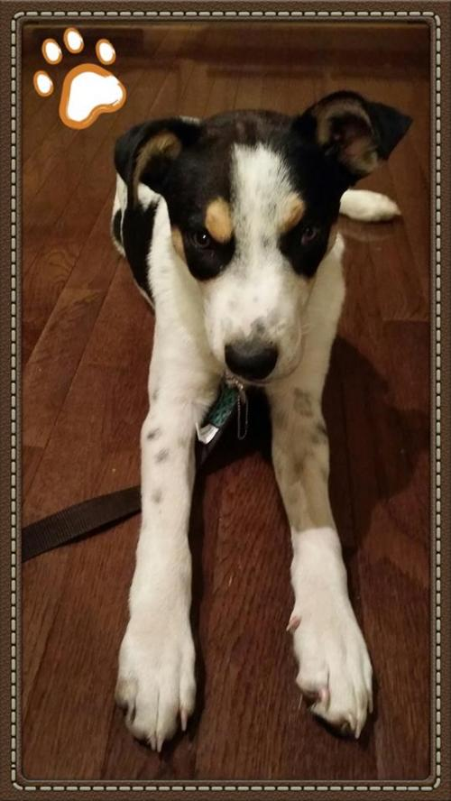Palmer **Foster or Foster to Adopt Needed**