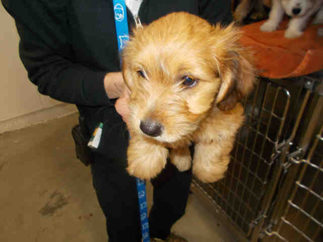 Dog Rescue Groups In Columbia Mo