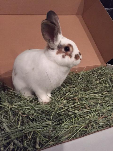 Happy Tails - Long Island Rabbit Rescue Group