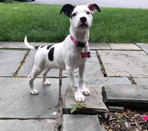 Adopt A Dog - PetConnect Rescue