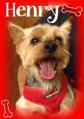 Learn more about the Yorkshire Terrier Yorkie. Yorkshire Terrier 911