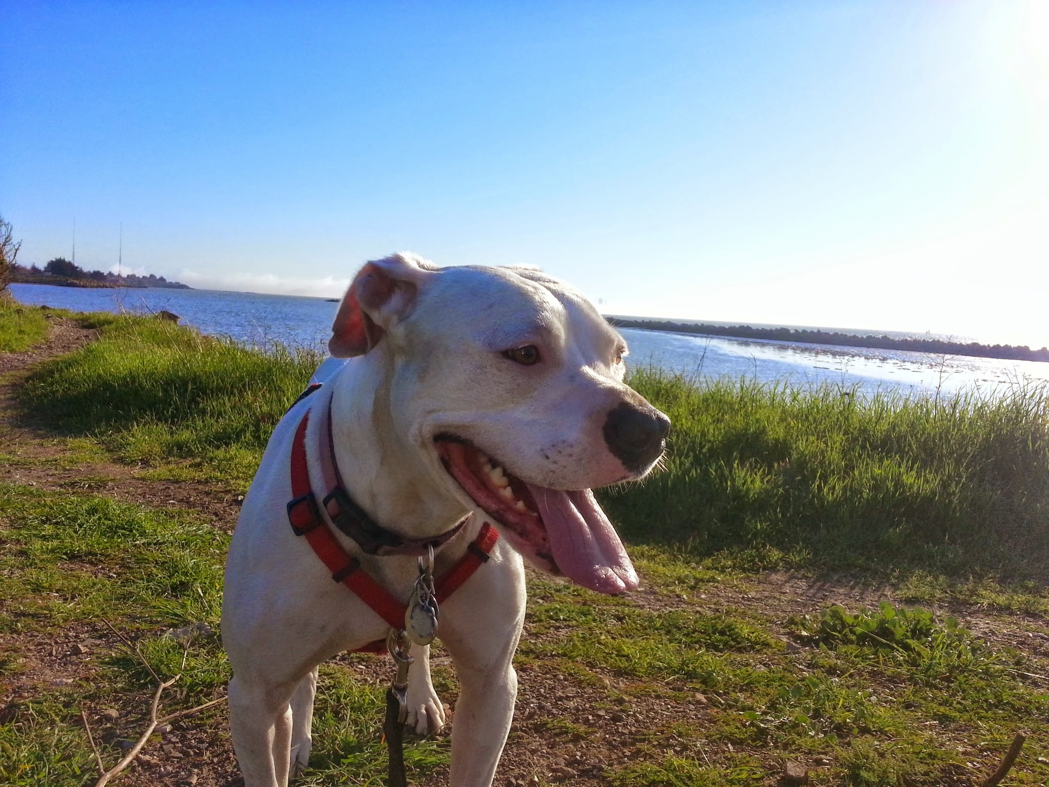 Northern California Family Dog Rescue Phone Number