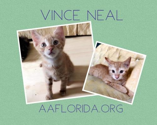 Vince Neal