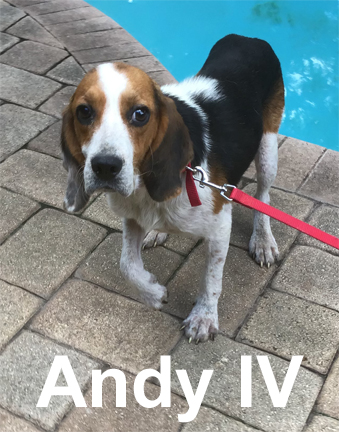 Andy IV