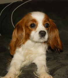 FL: Anna (will be adopted with Allie)