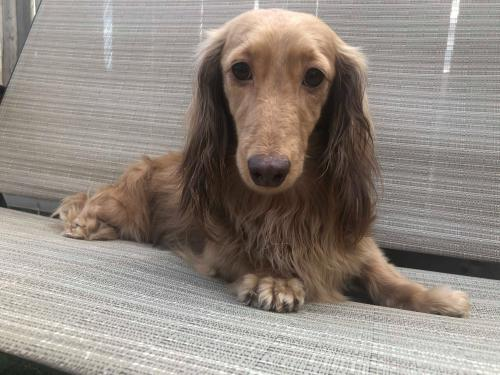 Sophie (Northern California ONLY)